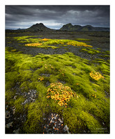 Lamm Green Patch - Iceland