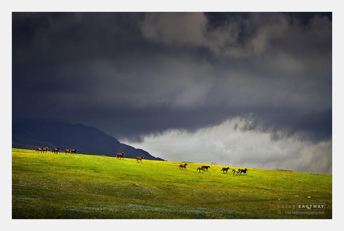 Nomadic horses, Assy Plateau, Kazakhstan