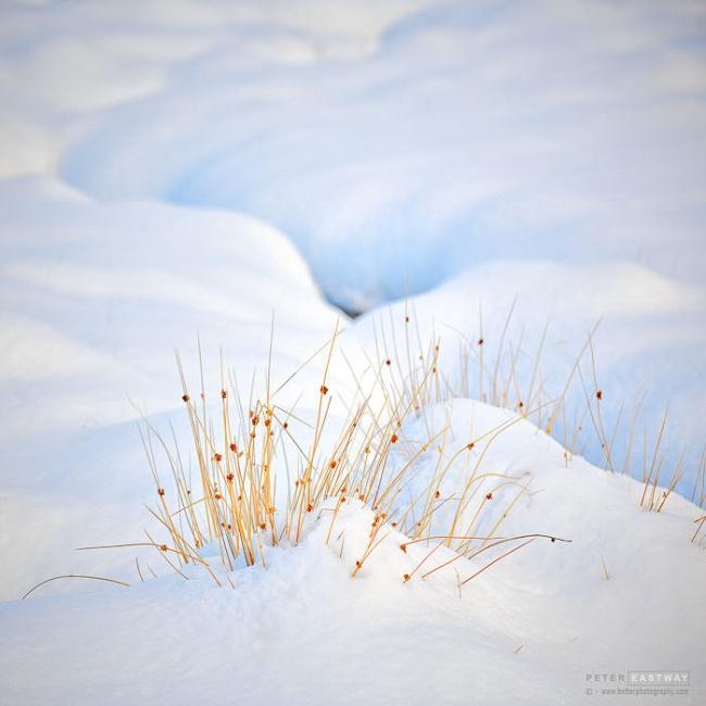 Grass in Snow, Middlehurst, 2019
